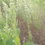 庭の防草!!効果的に雑草を防ぐ方法は!?
