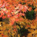 奈良の紅葉の名所!最高の場所はこの3つだ!!